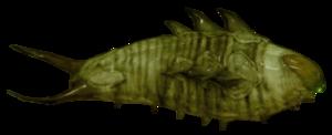 A Worm larva